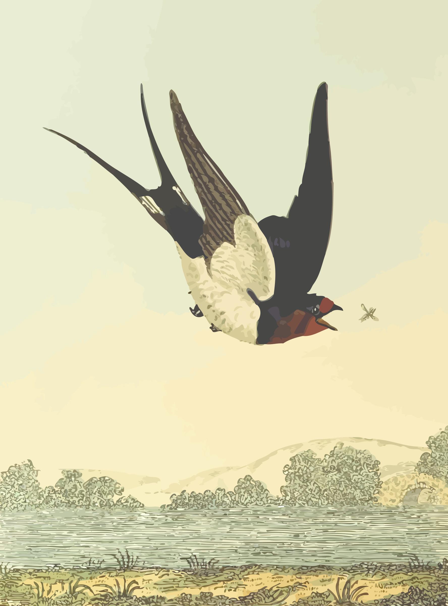 Barn Swallow svg #16, Download drawings