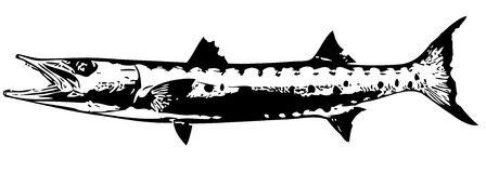 Barracuda clipart #15, Download drawings