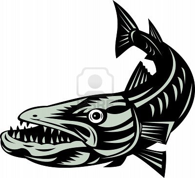 Barracuda clipart #7, Download drawings