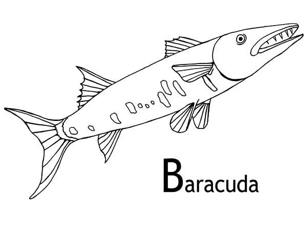 Barracuda coloring #14, Download drawings