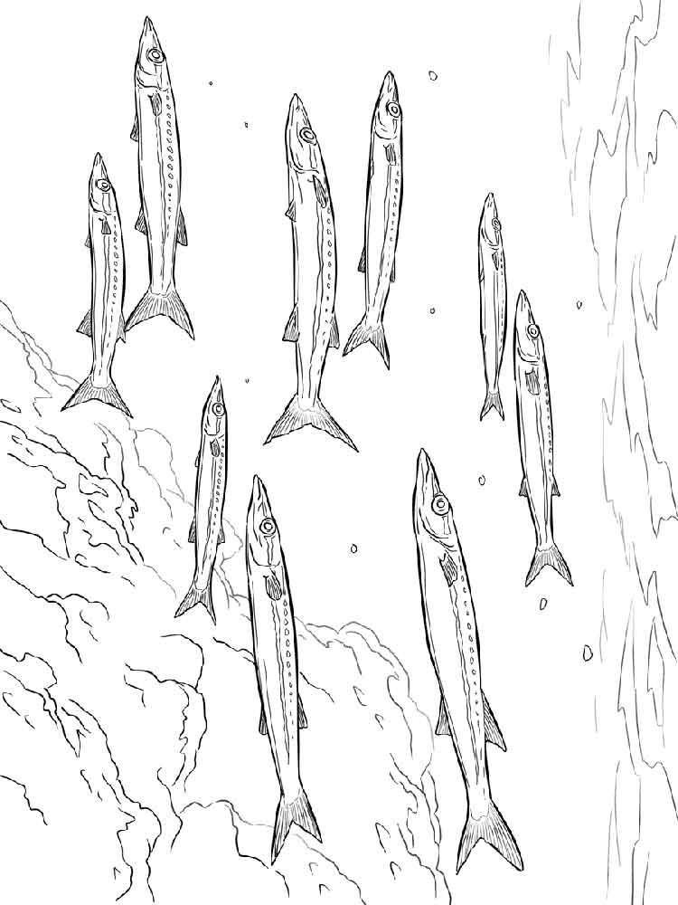 Barracuda coloring #5, Download drawings