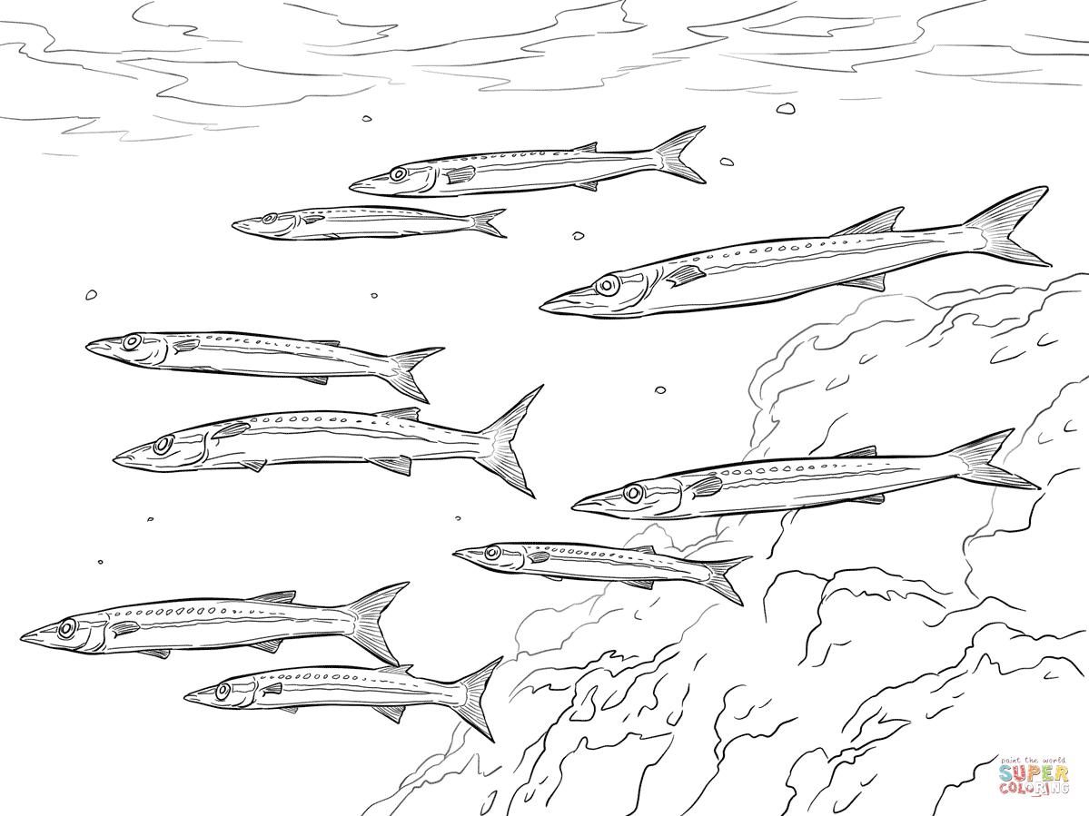Barracuda coloring #3, Download drawings