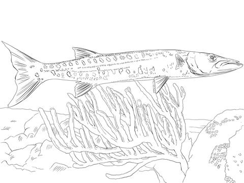 Barracuda coloring #12, Download drawings