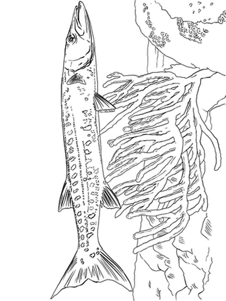 Barracuda coloring #2, Download drawings