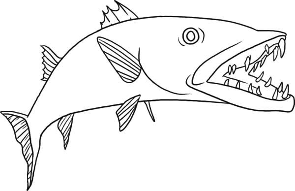 Barracuda coloring #19, Download drawings