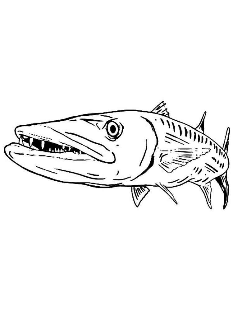 Barracuda coloring #16, Download drawings