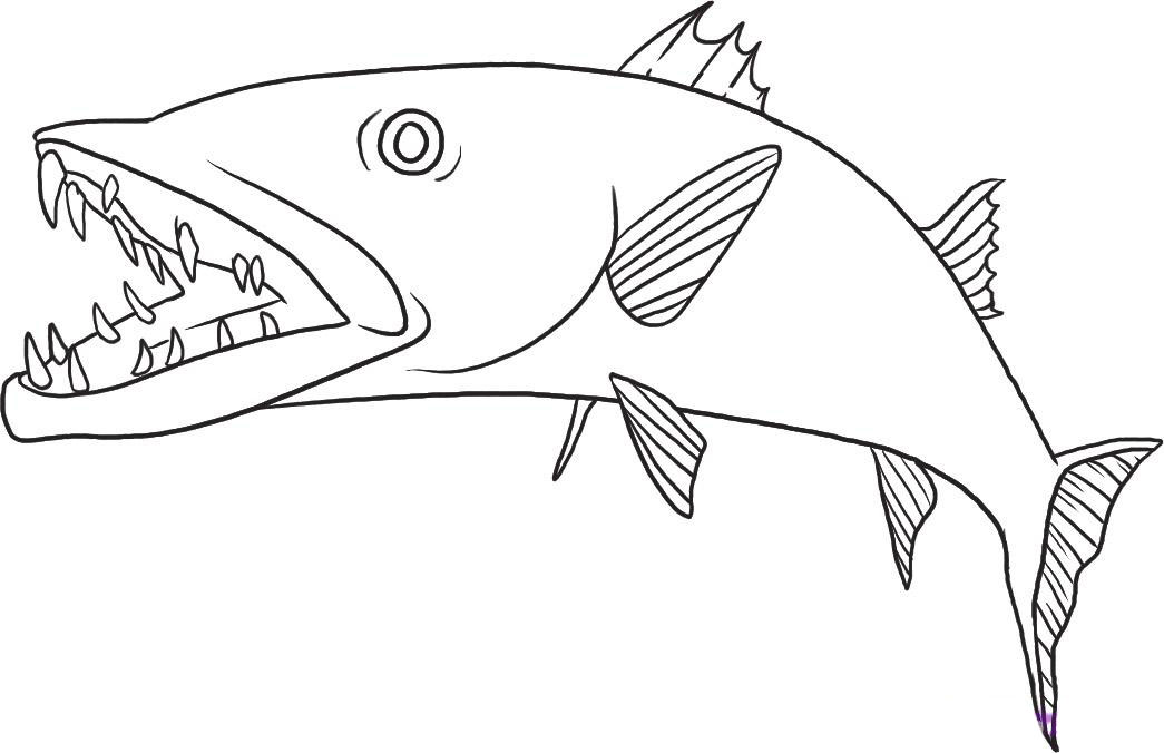 Barracuda coloring #9, Download drawings