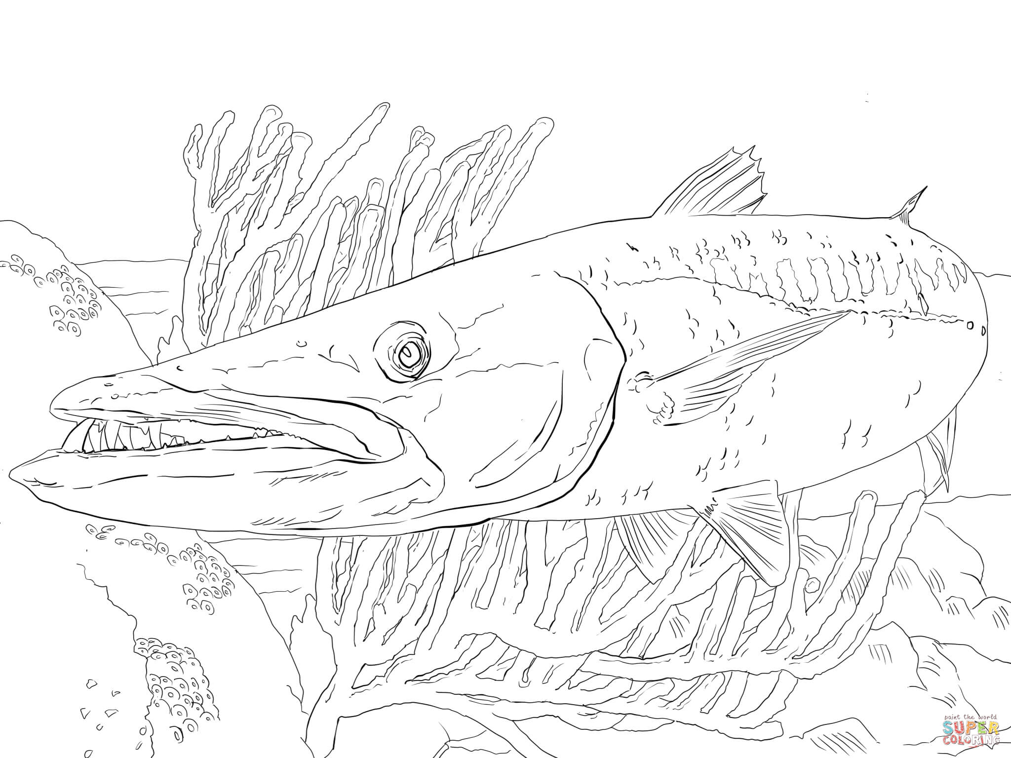 Barracuda coloring #4, Download drawings
