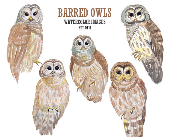 Barred Owl clipart #16, Download drawings