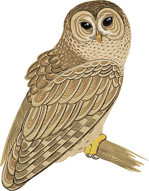 Barred Owl clipart #13, Download drawings