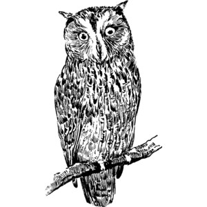 Barred Owl clipart #14, Download drawings