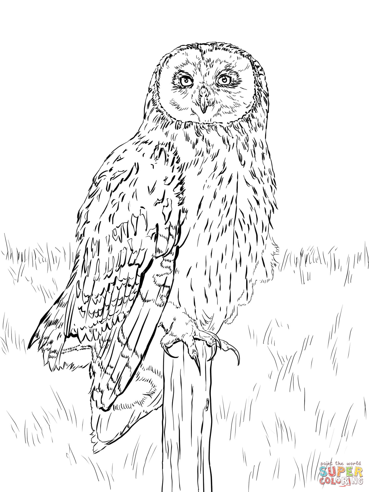 Eagle-owl coloring #11, Download drawings