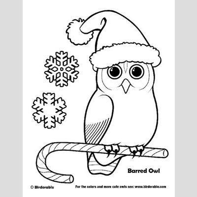 Barred Owl coloring #3, Download drawings