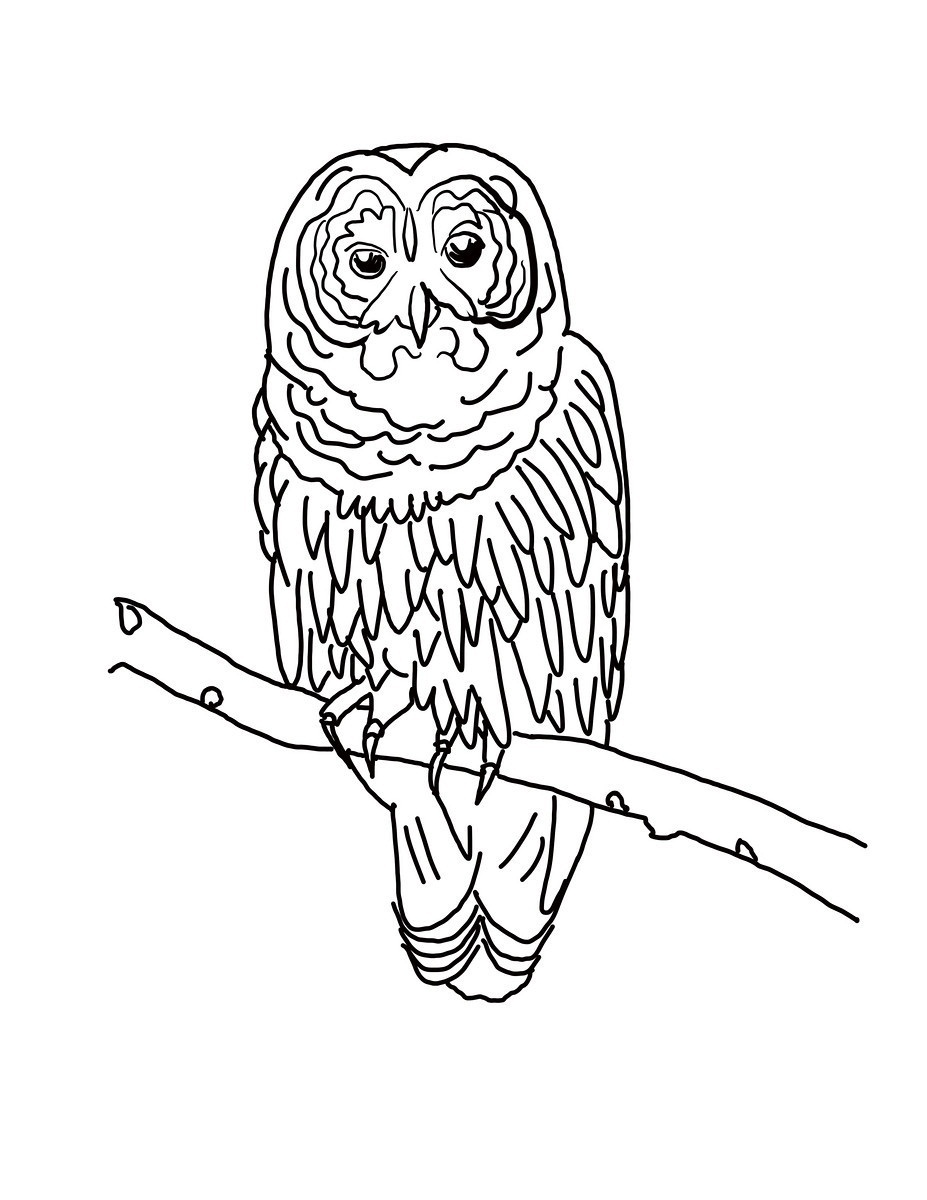 Barred Owl coloring #18, Download drawings