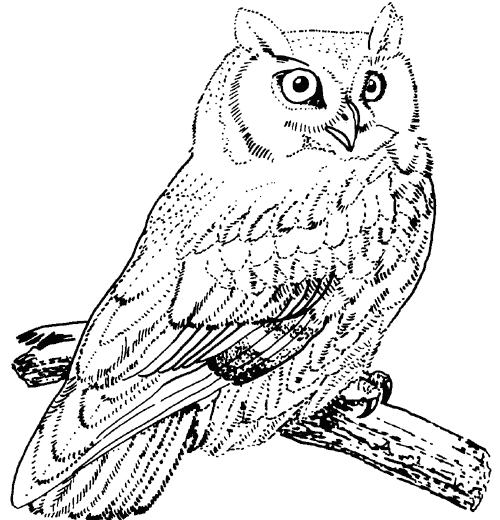 Great Horned Owl coloring #1, Download drawings