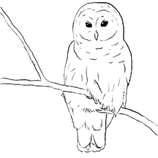 Eagle-owl coloring #19, Download drawings