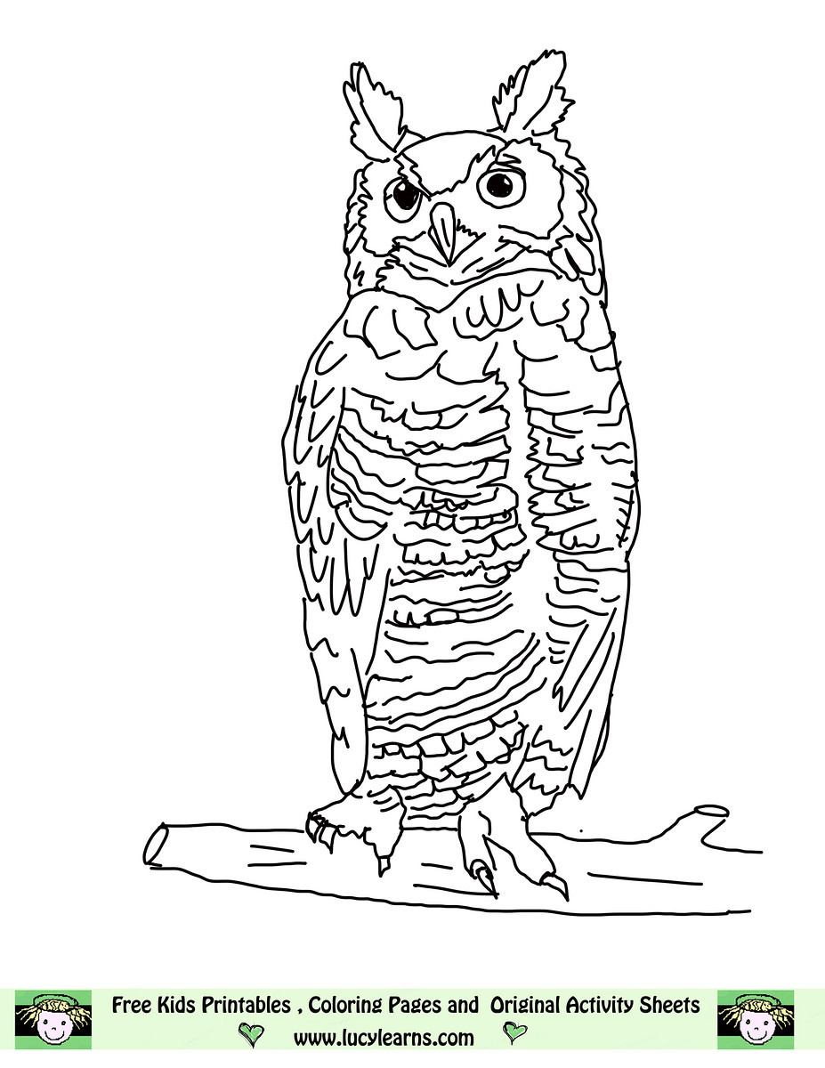 Barred Owl coloring #4, Download drawings