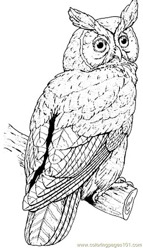 Barred Owl coloring #14, Download drawings