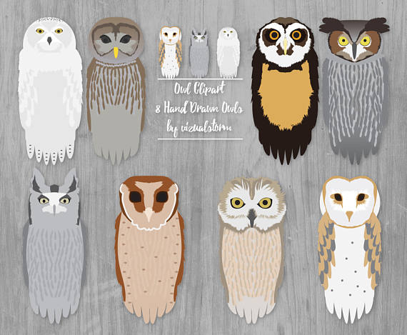 Barred Owl svg #4, Download drawings