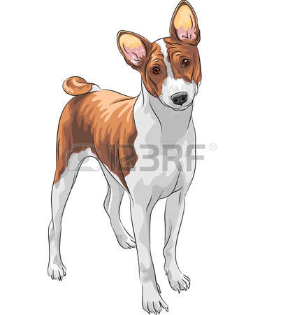 Basenji clipart #13, Download drawings