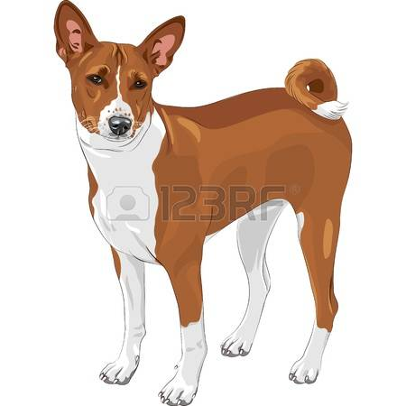 Basenji clipart #18, Download drawings