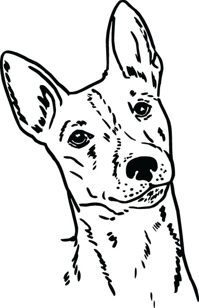 Basenji clipart #17, Download drawings