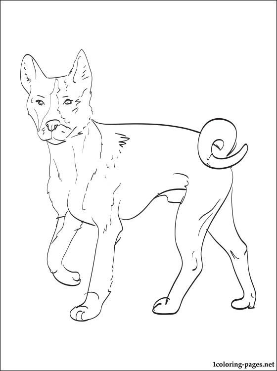 Basenji coloring #15, Download drawings