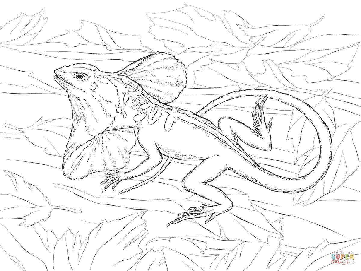 Monitor Lizard coloring #1, Download drawings