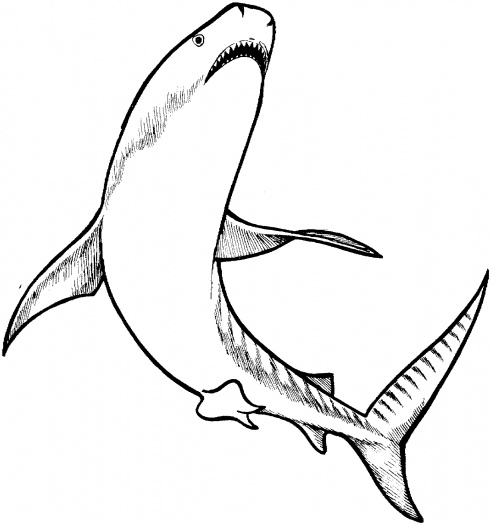 Basking Shark clipart #6, Download drawings