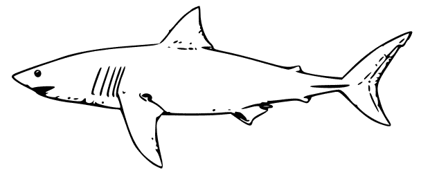 Silky Shark clipart #13, Download drawings