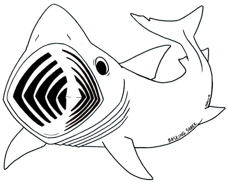 Basking Shark clipart #10, Download drawings