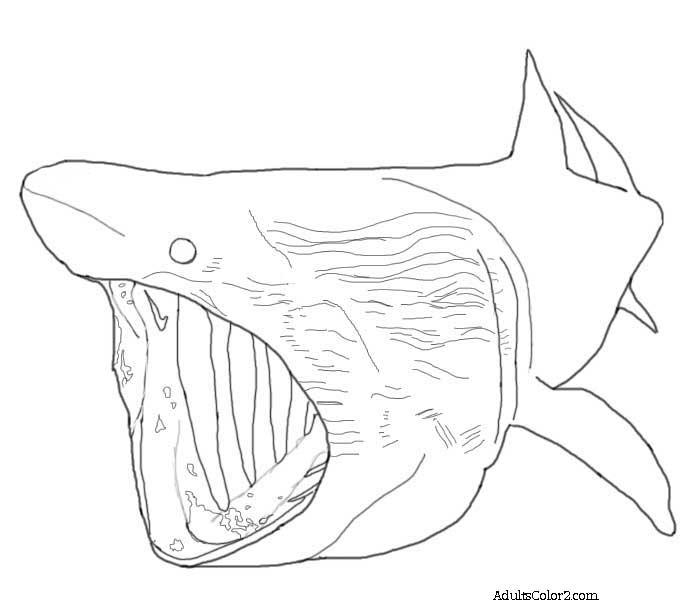 Basking Shark coloring, Download Basking Shark coloring ...