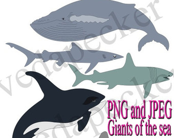 Basking Shark svg #6, Download drawings