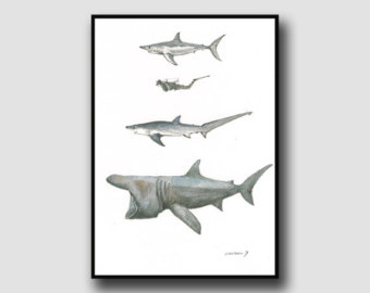 Basking Shark svg #8, Download drawings