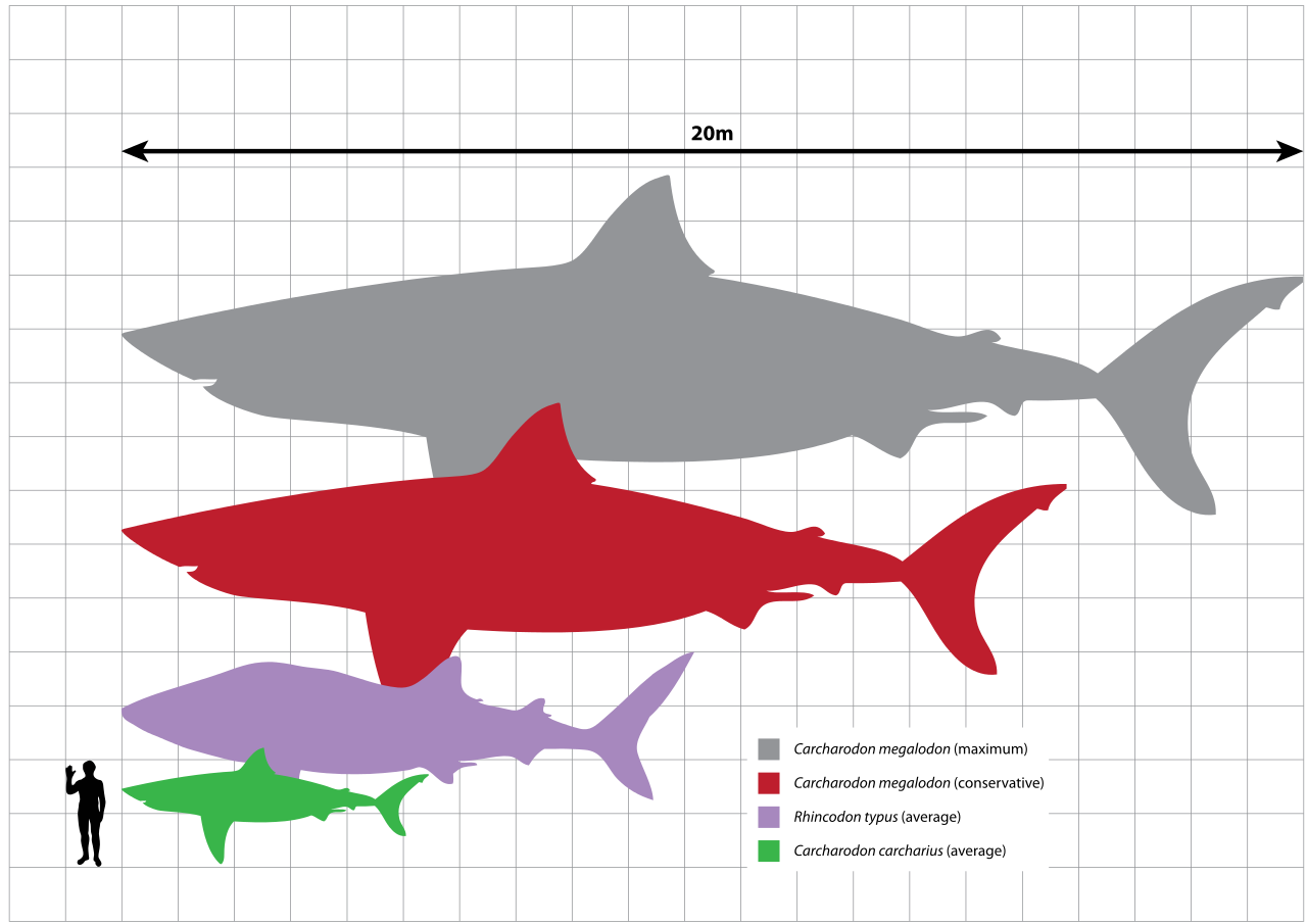 Basking Shark svg #18, Download drawings