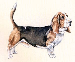 Basset clipart #5, Download drawings
