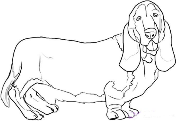Basset Hound coloring #16, Download drawings