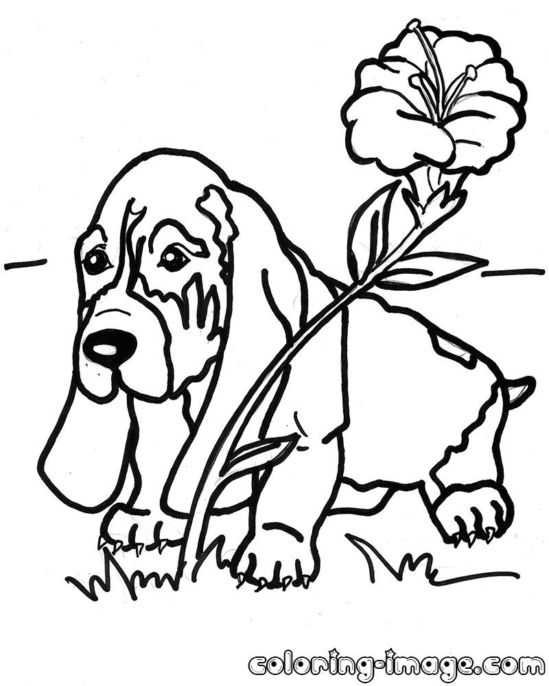 Basset Hound coloring #17, Download drawings