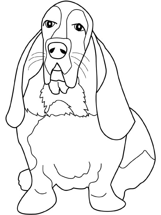Basset Hound coloring #20, Download drawings
