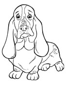 Basset Hound coloring #4, Download drawings