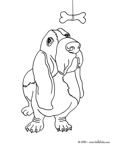 Basset Hound coloring #10, Download drawings