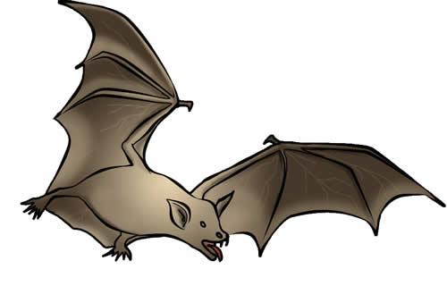 Bat clipart #6, Download drawings