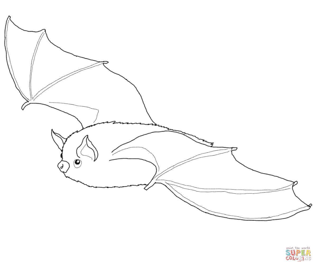 Bat coloring #2, Download drawings