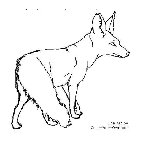 Bat-Eared Fox coloring #2, Download drawings