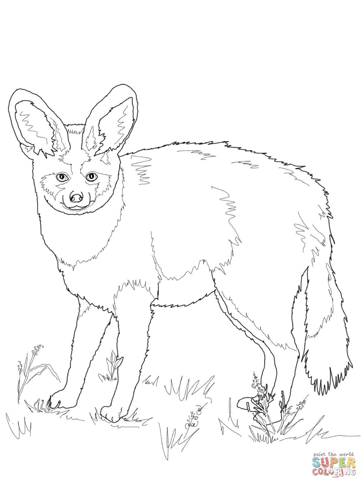Bat-Eared Fox clipart #17, Download drawings