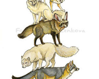 Bat-Eared Fox clipart #19, Download drawings