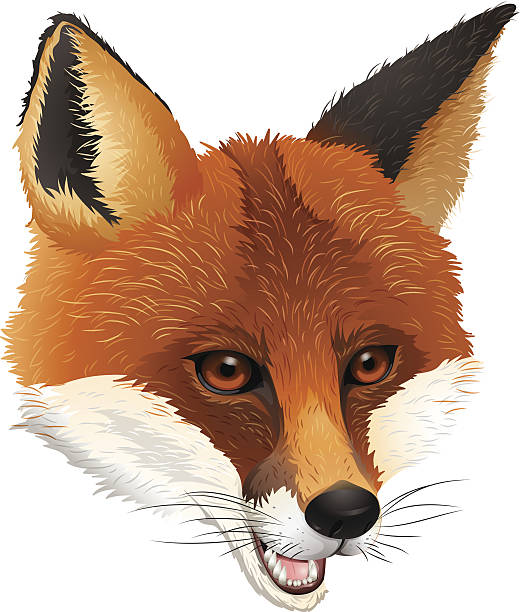 Bat-Eared Fox clipart #3, Download drawings