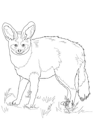 Bat-Eared Fox coloring #10, Download drawings