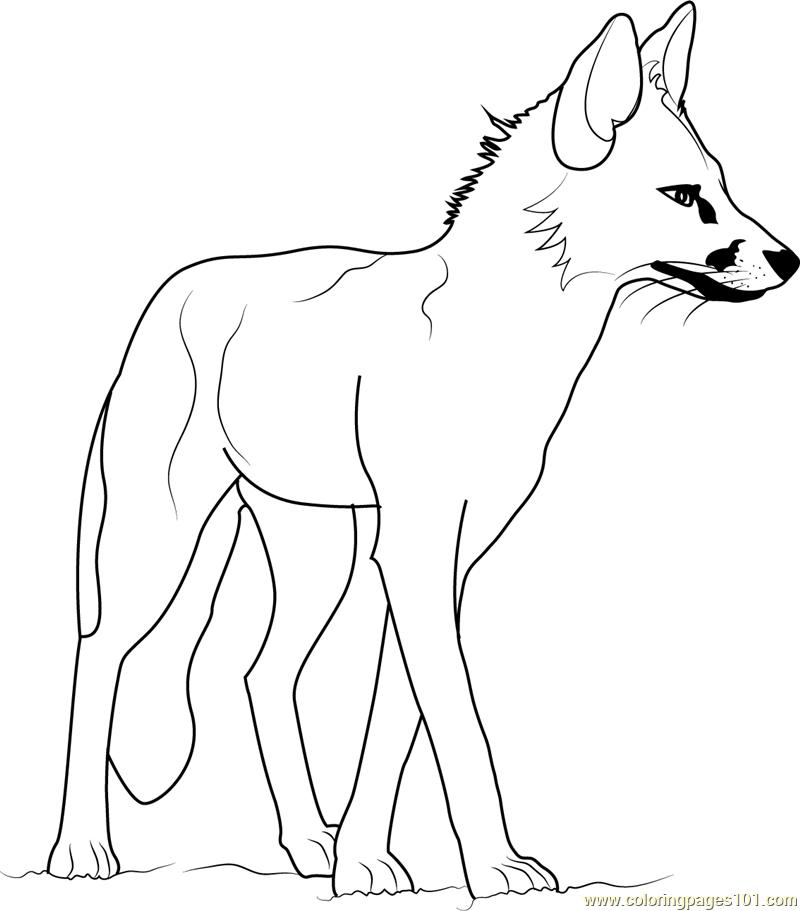 Bat-Eared Fox coloring #12, Download drawings