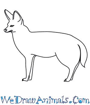 Bat-Eared Fox coloring #4, Download drawings
